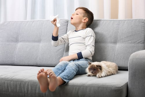 child sneezes on sofa at home with allergies